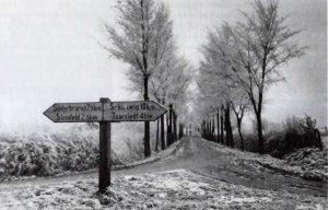 Das Foto zeigt die Kiusser Allee um 1955.
